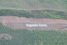 Bopparder Hamm